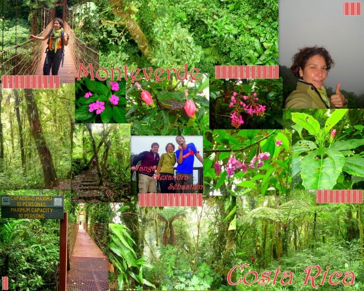2009-11-08_CostaRica_Monteverde-CerroTresAmigos_Seb&Tanguy-2